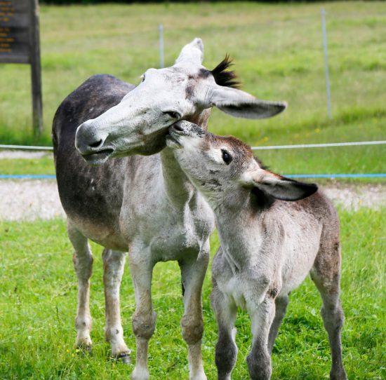 Echte liefde in natuurpark Paneveggio Pale di San-Martino in Trentino, duurzaam reizen, rondreis Trentino, Italie, duurzame, groen, groene