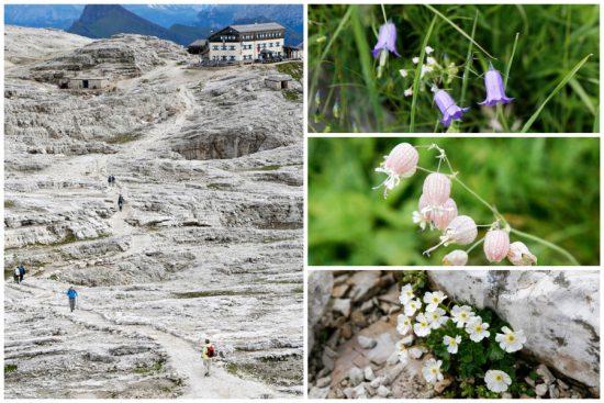 De tere natuur op het Pale plateau in Trentino, Italie, duurzaam reizen, rondreis Trentino, Italie