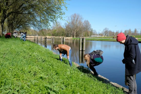 Ongelooflijk hoeveel eetbaars je vindt zo langs de waterkant. Wildplukexpeditie in Amsterdam-Noord, wildplukken, eetbare wilde planten