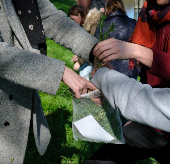 Alle kleefkruid verzamelen en op zoek naar de volgende eetbare plant. Wildplukexpeditie in Amsterdam-Noord, wildplukken, eetbare wilde planten