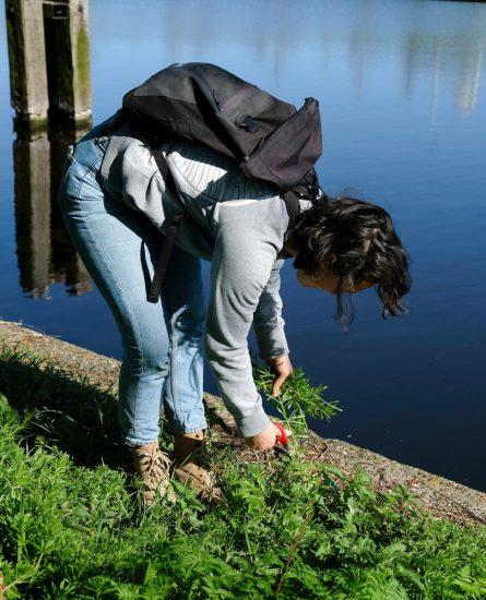 Op zoek naar eetbare wilde planten in het Noorderpark, Amsterdam. Wildplukexpeditie in Amsterdam-Noord, wildplukken, eetbare wilde planten