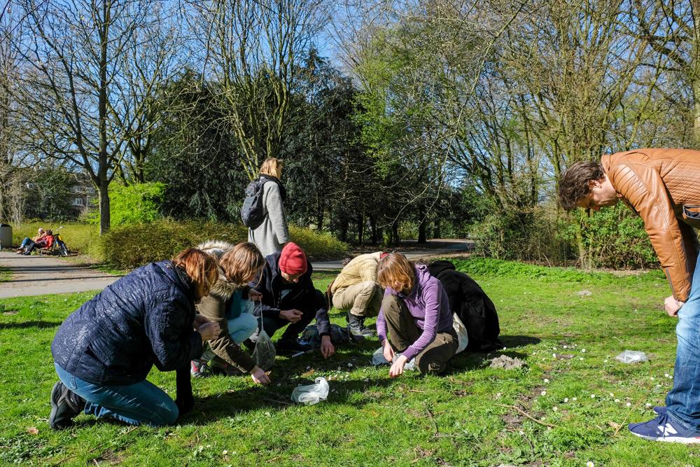 Madeliefjes zijn ook eetbaar, leren we tijdens de wildplukexpeditie. Wildplukexpeditie in Amsterdam-Noord, wildplukken, eetbare wilde planten