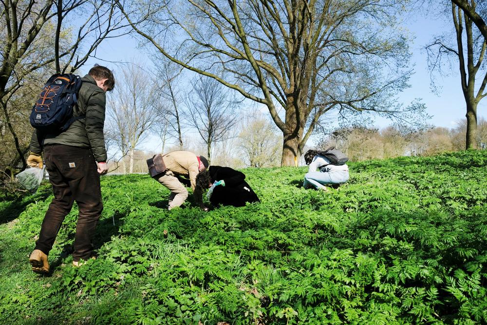 Eetbare wilde planten: op expeditie in Amsterdam