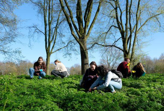 Wildplukexpeditie in Amsterdam-Noord, wildplukken, eetbare wilde planten