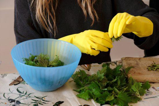 Koken met handschoenen, echt nodig als er brandnetel op het menu staat Wildplukexpeditie in Amsterdam-Noord, wildplukken, eetbare wilde planten