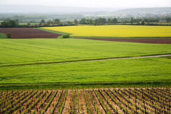 De kleurrijke lappendeken van de Bourgogne, Fietsen in de Bourgogne, Frankrijk