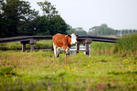 Lekker Hollands landschap in de Eilandspolder. polder, polders, boottocht Eilandspolder, Noord-Holland, Nederland, varen, boottoer, excursie, boot