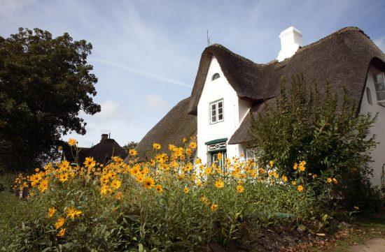 Op Sylt staan vele prachtige rietgedekte huizen. Rondreis Duitse Wadden, waddeneiland, Duitsland, waddenzee, Sylt