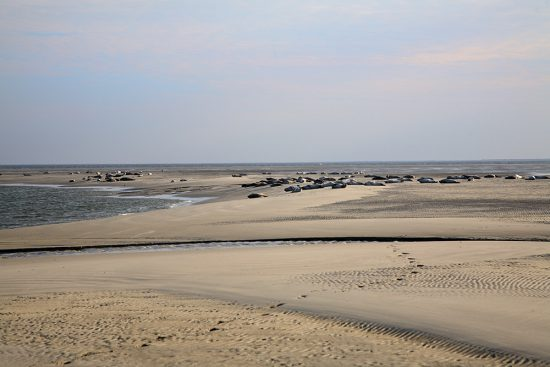 Zeehonden spotten op waddeneiland Borkum, rondreis Duiste Wadden, eolanden waddeneilanden