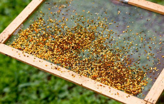 Verschillende kleuren bijenpollen. Trentino, Italie