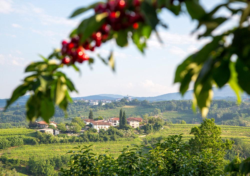 Kersenfestival: wandelen in Slovenië