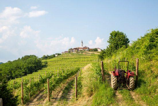 Wandelen langs wijngaarden in de Brda-regio, Slovenië . Slovenie, kersenfestival in de Brda regio