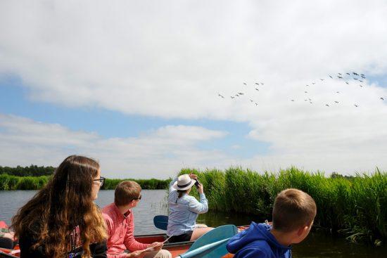 Fotomoment: overvliegende ganzen. Wetlands Safari, kano tour in Ilperveld, de groene achtertuin van Amsterdam, n