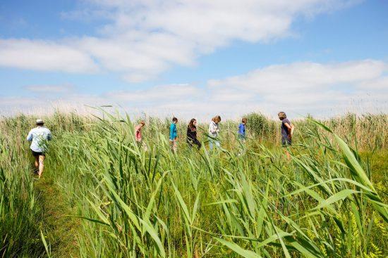 Wandelen over trilveen, een bijzondere gewaarwording. Wetlands Safari, kano tour in Ilperveld, de groene achtertuin van Amsterdam, n