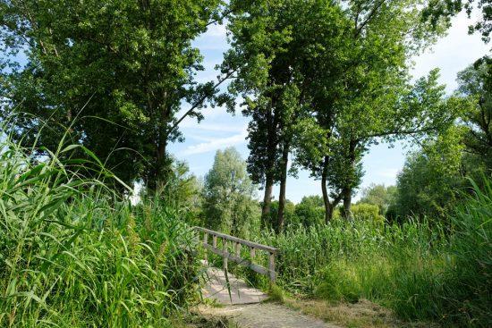 In Zaandam zijn twee tiny forests en er komen er meer, mini-bossen
