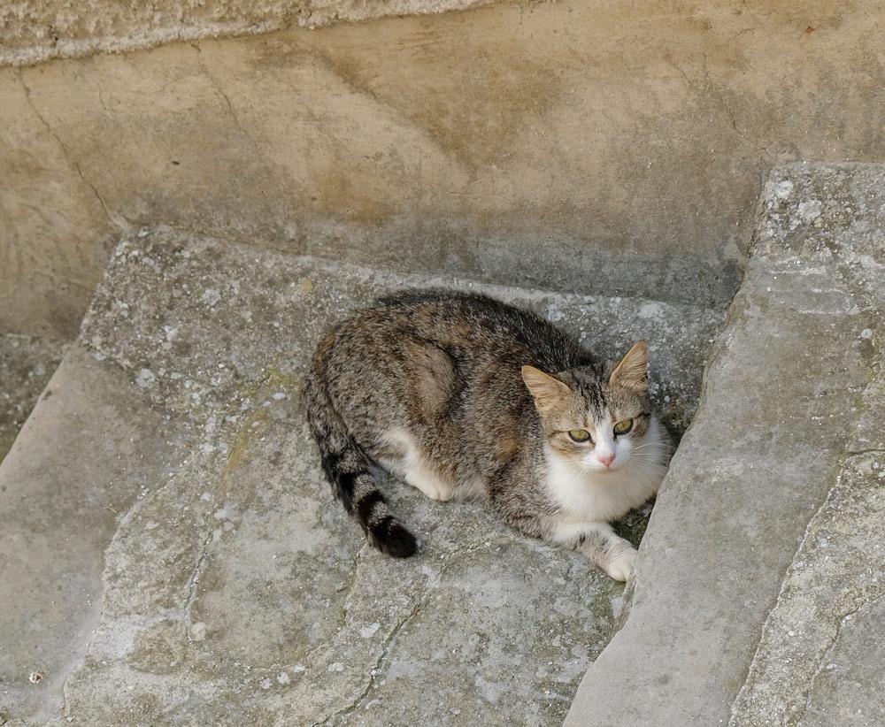 Blije bewoner van Pietrapertosa. Rondreis Basilicata, Italie, langs Matera en ankele andere stadajes in de Kleine Dolomieten van Lucarna