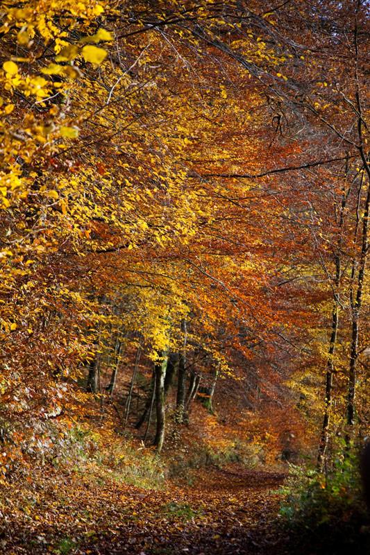 De herfst is een prachtige periode voor een roadtrip la Gaume . Rondreis La Gaume, Wallonie, Belgie, hotspots, bezienswaardigheden, roadtrip