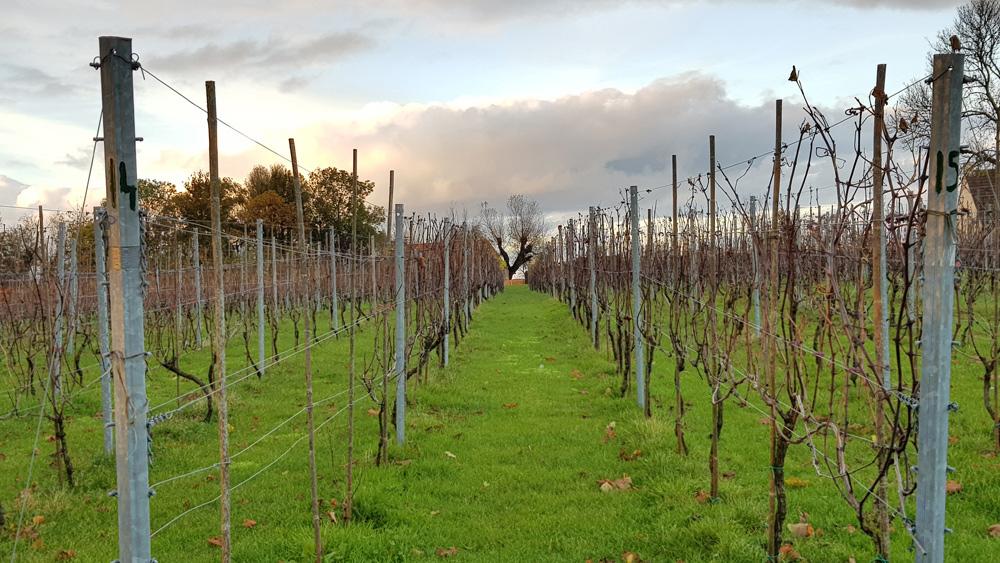 's Winters een wat troosteloos gezicht maar in de zomer en het najaar hangen hier trossen biologische druiven. rondreis Waddenkust, Groningen, roadtrip