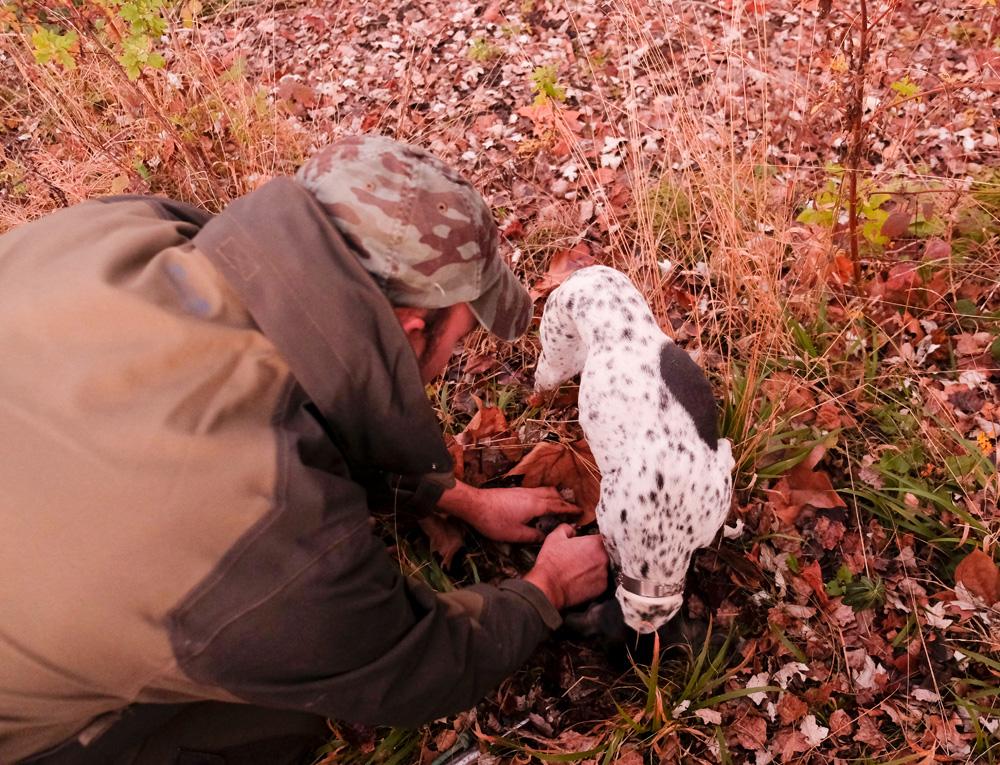 60% van de witte truffel wordt gevonden in Molise. Molise, Italie, duurzame rondreis in een ontontdekte regio. Moleasy