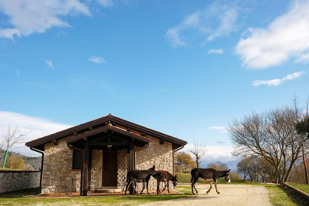 De ezels komen je 's morgens zelfs begroeten bij je huisje. Molise, Italie, duurzame rondreis in een ontontdekte regio. Moleasy