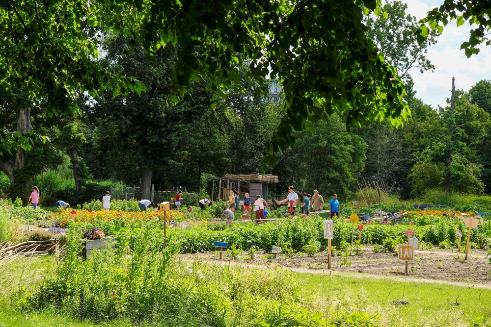 Schoolkinderen leren in Amsterdam van alles over tuinieren in de schooltuin. Schooltuin Vink. Park Frankendael in Amsterdam Watergraafsmeer. Groen in de stad.